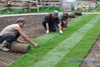 Laying turf lawn: technology and process nuances