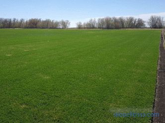 Lawn grass in rolls, prices for rolled grass, which lawn grass to buy in Moscow