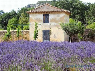 Provence style garden - the basic rules of formation