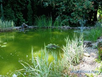 How to make a pond in the country - an artificial decorative pond in the garden and on the site, beautiful design of the pond, photo