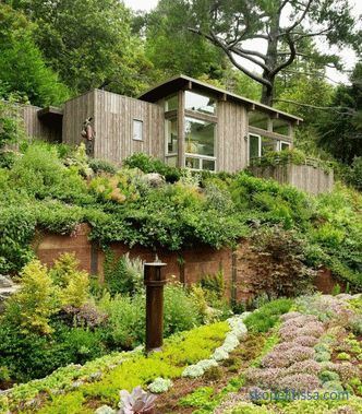 Two mini-cottages as an extension to the house in Mill Valley, California