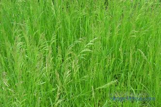 basic functions and suitable grass mixtures