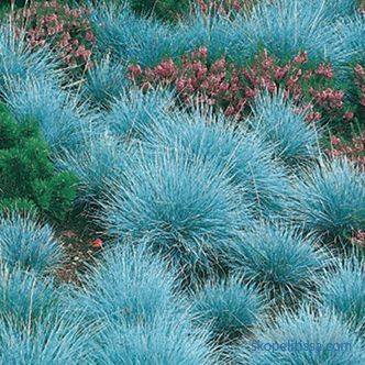 Ornamental grass for the garden - detailed classification
