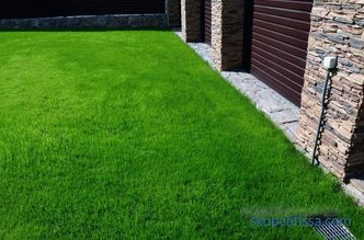 description, features, characteristics of lawn grass for the lazy